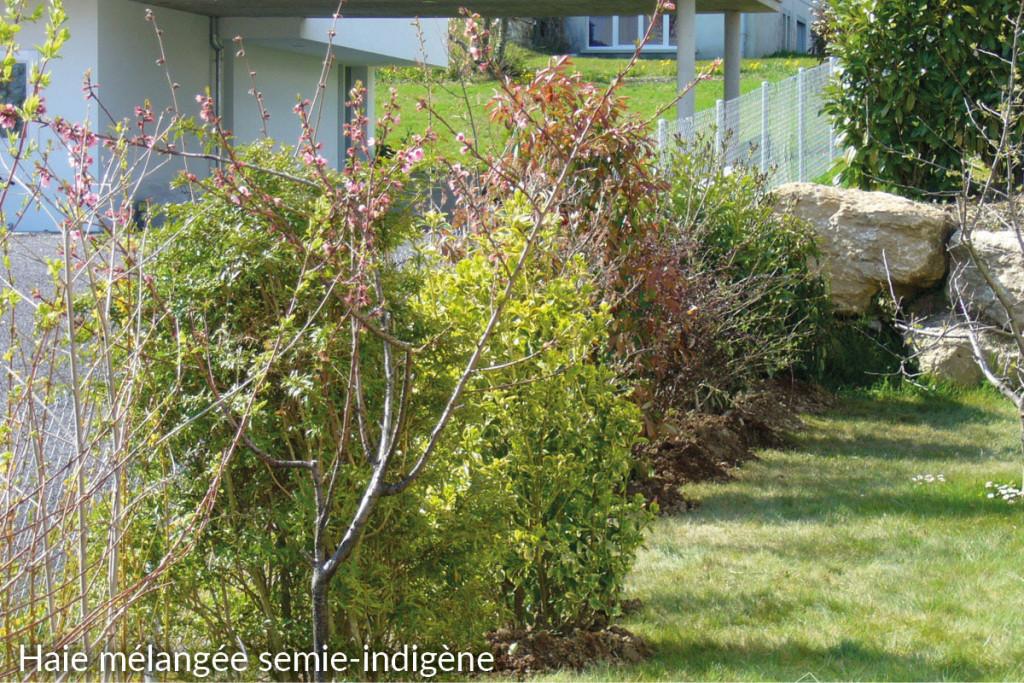 5-haie-melangee-semi-indigene